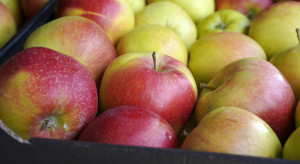 Rosną możliwości eksportowe tureckich producentów jabłek