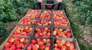 Rosja spodziewa się produkcji ponad 1,08 mln ton owoców