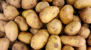 Rosyjski eksport ziemniaków wzrósł o 36 proc.