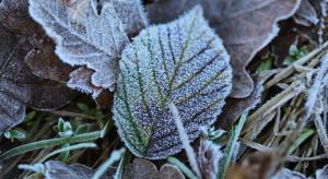 Prognoza pogody na piątek: Duże ochłodzenie i przymrozki