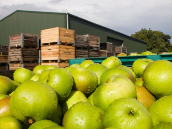 Ankieta: Rosnące koszty mają wpływ na funkcjonowanie gospodarstw sadowniczych