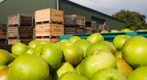 Ankieta: Sadownicy mniej inwestują w gospodarstwa. Powodem niestabilne ceny jabłek