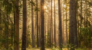 Prezydent interweniuje ws. próby przeniesienia nadzoru nad Lasami Państwowymi do resortu rolnictwa