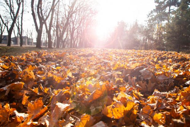 Pogoda na 26 listopada: Będzie pogodnie i słonecznie