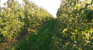 Jakie nawozy fosforowe i potasowe stosować jesienią w sadzie?