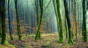 Doradca prezydenta: Las nie jest tylko plantacją