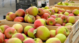Rynek Bronisze: Duża dostępność jabłek ale popyt ze strony kupujących na niskim poziomie