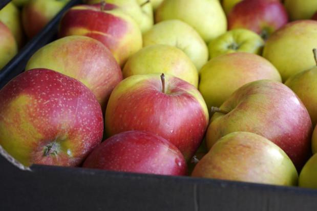 PIORiN: Eksport polskich jabłek do Tajwanu będzie kontynuowany w sezonie 2020/21