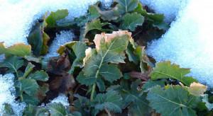 IMGW: w nadchodzący weekend do Polski może zawitać zima