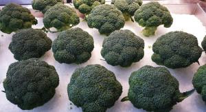 Przechowalnictwo warzyw – nowoczesne technologie a możliwości ograniczenia strat
