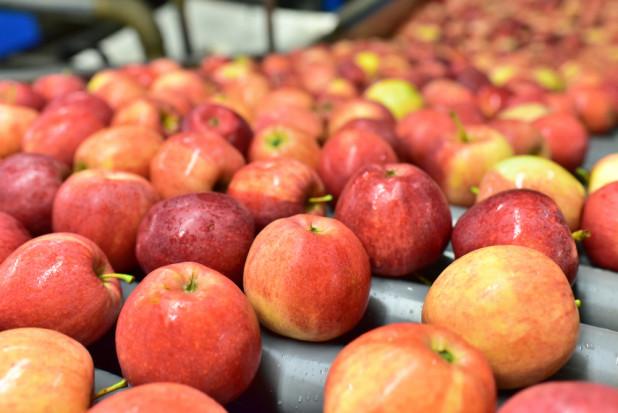 Jabłka 2020: Jakie ceny i popyt na sortowanie?