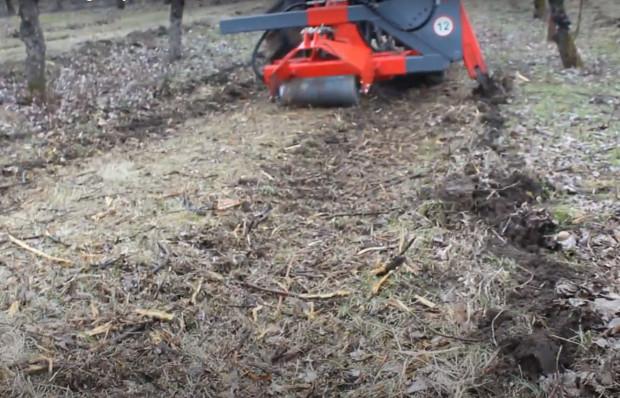 Dlaczego warto podciąć korzenie w sadzie jesienią?