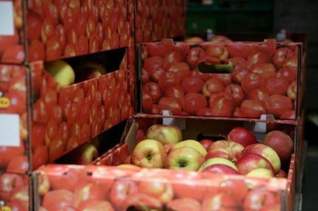 Eksport jabłek z Białorusi do krajów b. Związku Radzieckiego spadł o 2/3