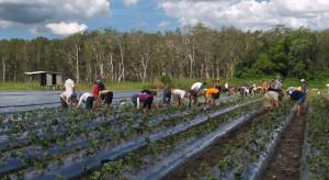 Dostępność pracowników sezonowych na wiosnę 2021- czego możemy się spodziewać?
