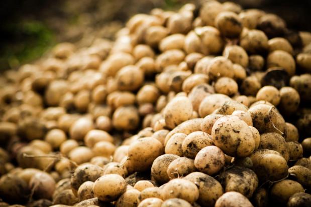 Niemcy: Spadły ceny ziemniaków ekologicznych
