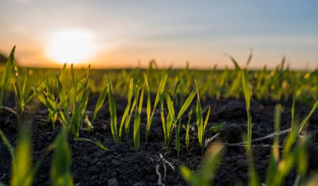 5 grudnia przypada Światowy Dzień Gleby