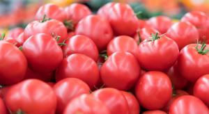 Ceny warzyw na Broniszach: polskie pomidory malinowe nawet 17 zł/kg