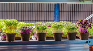 Farmy wertykalne w sklepach przyszłością sprzedaży ziół i warzyw liściowych?