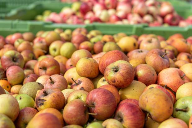 UOKIK nie dopatrzył się zmowy cenowej branży przetwórczej jabłek