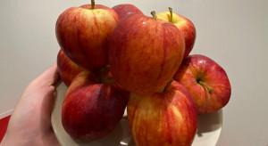 Pierwsze jabłka z GPO Galster dotarły do Tajwanu