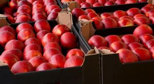 Fruit-Group: Jesienią wyeksportowaliśmy o 30% więcej jabłek