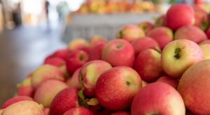 Bronisze: Obecny czas jest trudny dla sprzedawców jabłek