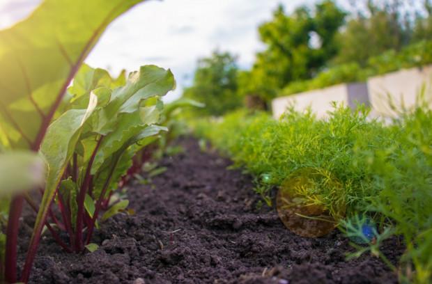 Liczba gospodarstw ekologicznych spada, ale rośnie ich areał oraz wydajność produkcji