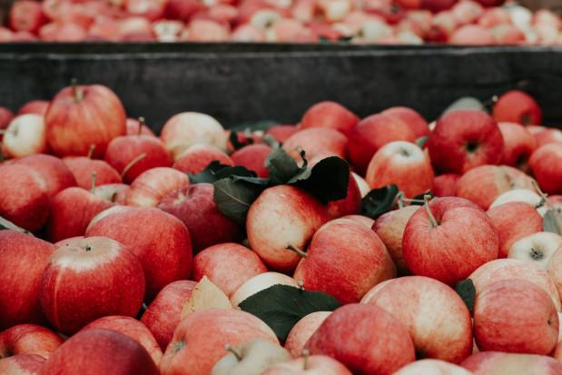 Lidl i Biedronka prześcigają się w promocjach na jabłka Boskoop