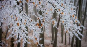 Śnieg w małopolskim i lubuskim, deszcz w warmińsko-mazurskim i świętokrzyskim