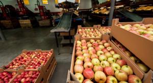 Aktualne ceny jabłek na sortowanie. Największe spadki w cenach Gali