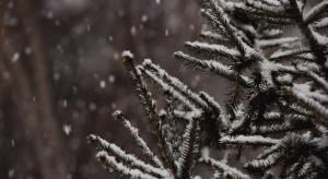 IMGW: W święta 20 proc. szans na śnieg