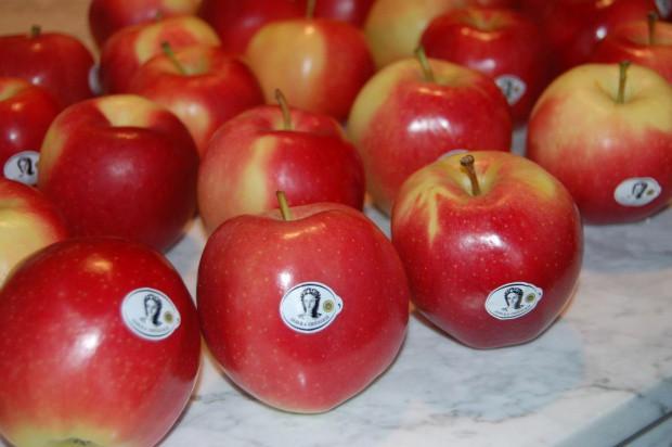 Stowarzyszenie Sady Grójeckie zachęca seniorów do jedzenia jabłek