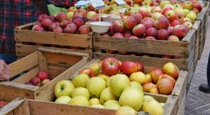 Bronisze: Zastój w handlu jabłkami, brakuje kupujących