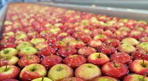 KOWR: Eksport polskich jabłek do Senegalu mógłby być większy
