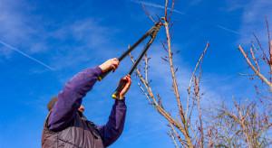 Rolnicze choroby zawodowe - czym są i co przysługuje rolnikowi w ramach świadczeń KRUS?