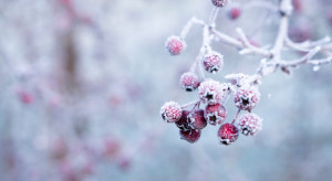 21 grudnia rozpoczyna się astronomiczna zima