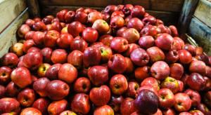 Przechowalnictwo jabłek: Straty z powodu parcha i gorzkiej zgnilizny mogą być znaczne