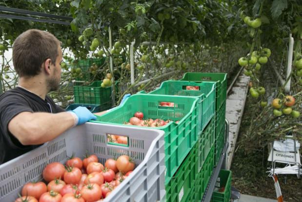 Mazowieckie: W nowych szklarniach Citronexu znajdzie prace ok. 300 osób
