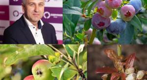 Tarczniki i miseczniki – nowe wyzwania w ochronie upraw sadowniczych