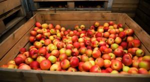 WAPA: Ile jabłek w polskich chłodniach w grudniu?