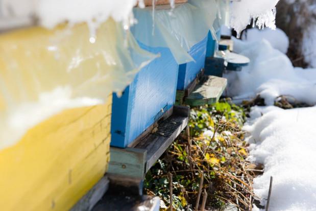Wielkopolska: Zniszczono pasiekę w Jastrowie