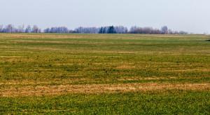 GUS: Średnio 130 tys. zł kosztował hektar ziemi rolnej w 2019 r