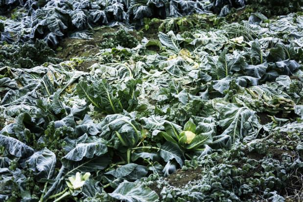 Mroźny front powoduje wzrost cen warzyw w Hiszpanii