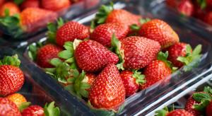 Francuski Carrefour rezygnuje ze sprzedaży truskawek w styczniu