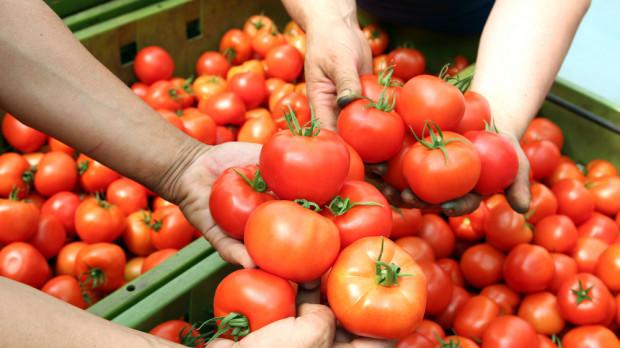 Hiszpańskie pomidory zalewają polski rynek