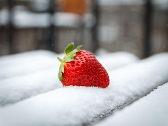 Śnieżyca Filomena powoduje spore straty w hiszpańskim ogrodnictwie