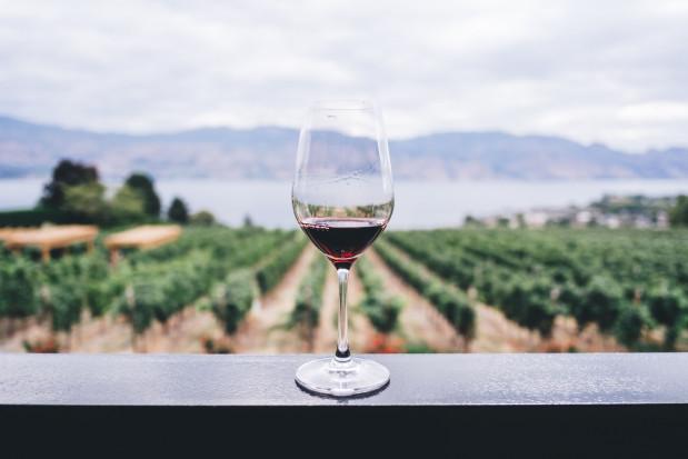 KOWR: 35-krotny wzrost produkcji wina w Polsce