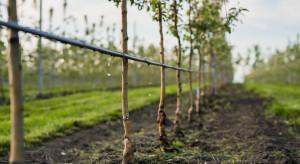 Zmęczenie gleby w sadach - czym jest i jak je niwelować?