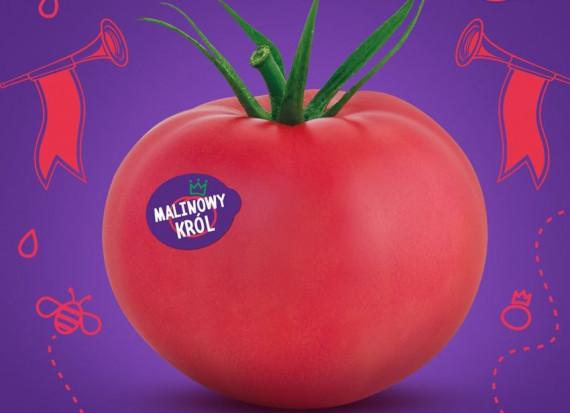 Pomidory Malinowy Król nie podobają się autorowi piosenki