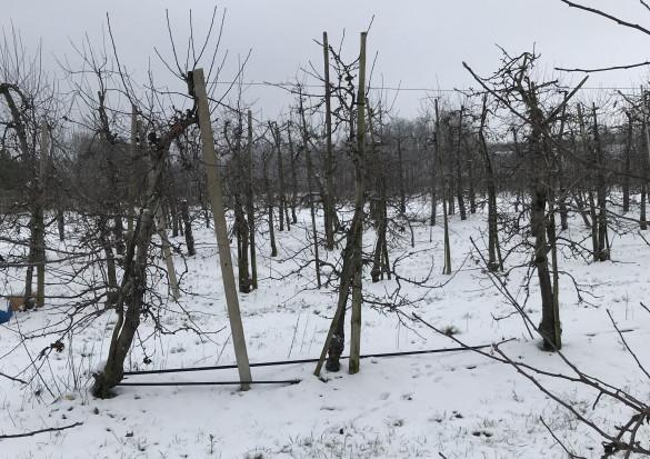 Nawet -28 st.C w okolicach Błędowa. Czy silny mróz zaszkodzi sadom?